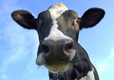 Nonprofits, Think Like the Cows
